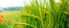 Развитие сельского хозяйства — рост продаж сельхозтехники